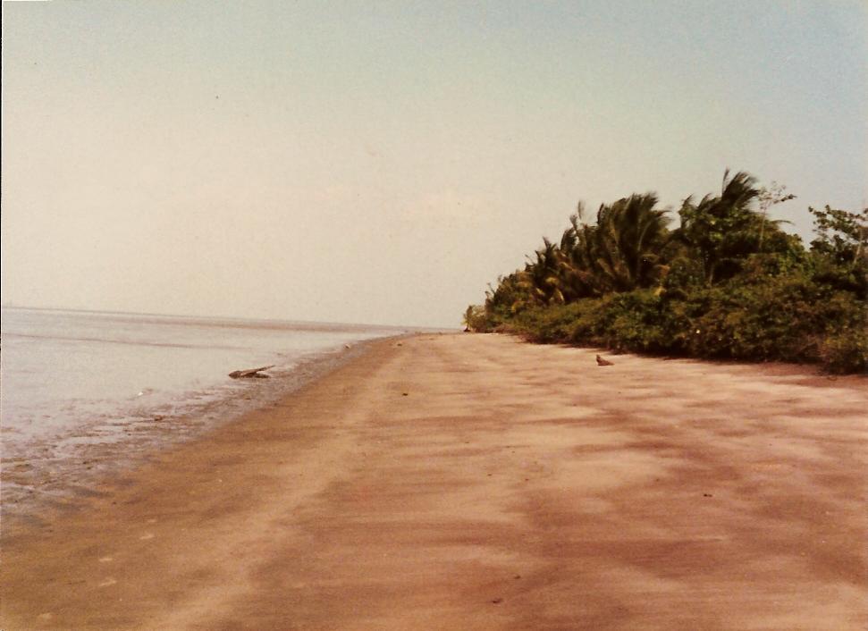 PLAGE DE LA MALMANOURY, après 1 heure de pirogue dans les marécages