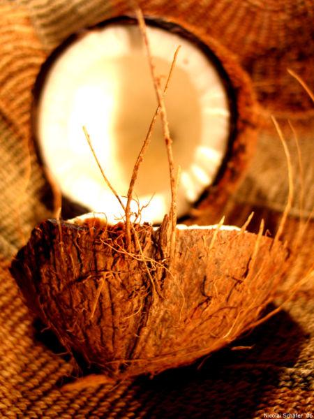 Noix de coco